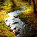 Sonbaharda-orman-manzarasi-gergi-tavan-gorseli