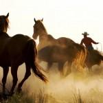 Vahsi-batida-kovboy-ve-atlar