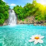 selale-havuzunda-lotus-cicegi,-Vietnam-gergi-tavan-gorseli