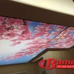 Dijital baskı gergi tavan kiraz çiçekleri baskısı seçimi