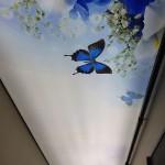 Dijital Baskı Gergi Tavan Galeri, gergi taban uygulama galeri