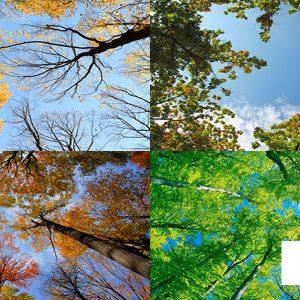 gergi tavan Ağaç Görselleri