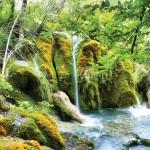 Yesil-yosunlar-arasinda-akan-selale-gergi-tavan-gorseli