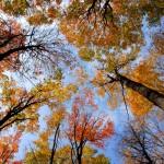 Gergi tavan ağaç görseli