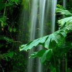 -yagmur-ormanlarinin-yemyesil-yapraklari-arasinda-akan-selale-gergi-tavan-gorseli
