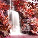 şelale, kırmızı yapraklı ağaçlar ve şelale, şelale resimleri