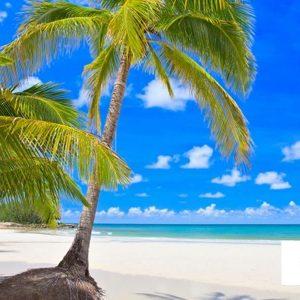gergi tavan palmiye görselleri